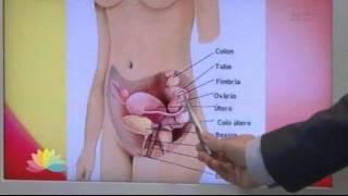 Dor quadril pélvica no inferior dor e