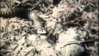 Змеи 1962