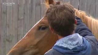 Uwe Weinzierl - Natural Horsemanship Trainer