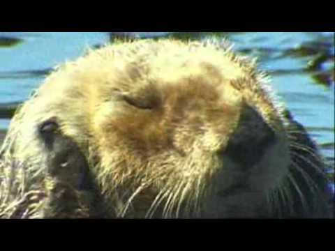 video:Monterey Breakwater dive site