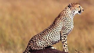 Nature Animal Documentary - English Subtitles