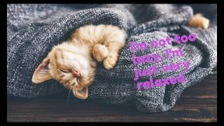 Cats In Beds    Funny Video Of Cute Cats Sleeping In Beds