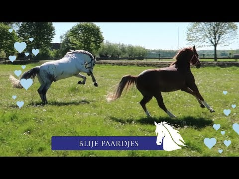 in mei gaan alle paardjes op de wei * Hart voor Paarden *