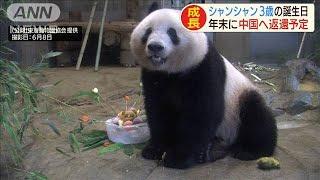 """シャンシャン""""最後の誕生日"""" 年末には中国返還へ(20/06/12)"""