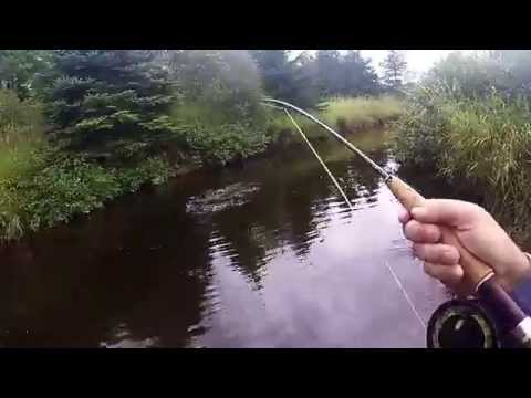 Brook Trout In Trout River, PEI, Canada