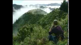 Million dollar Marijuana plot East Cape - New Zealand