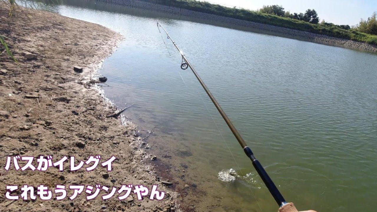 大阪 バス釣り