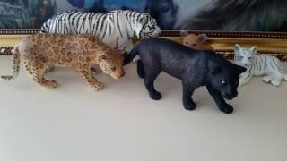 Моя коллекция диких кошек и других