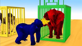 Learn Colors Learn Animal Name Sound Gorillas Nursery Rhymes and Cages Cartoon for Children