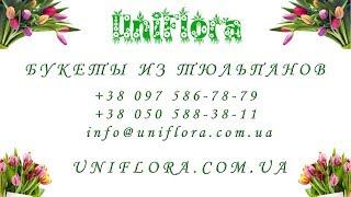 Большие букеты из тюльпанов Киев, Харьков, Днепропетровск, Донецк, Крым, Херсон(Букеты из тюльпанов: http://uniflora.com.ua/bouquet/bouquet-tulips Контакты: +38 097 586-78-79 или +38 050 588-38-11., 2014-02-03T11:55:42.000Z)
