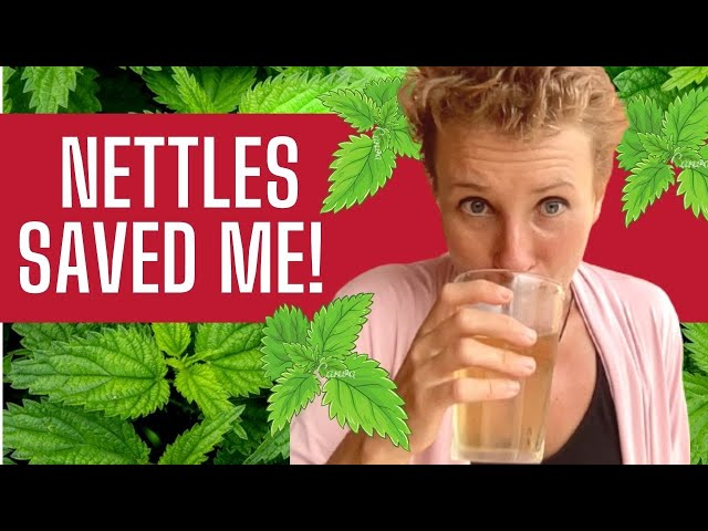 Nettle Tea for Allergy Relief - Why it Works for Everyone!