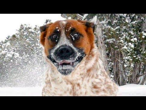 essayez de regarder sans rire ce chiens dr les de neige fails youtube. Black Bedroom Furniture Sets. Home Design Ideas