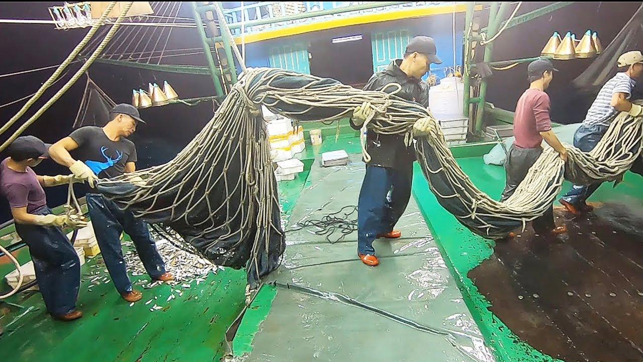 Xem Toàn Bộ Một Đêm Đánh Bắt Cá Biển Của Tàu Lưới Mành #70