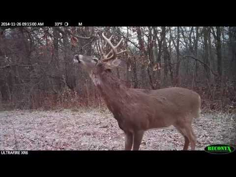 Scrapes Tell The Tale For Great Deer Hunting