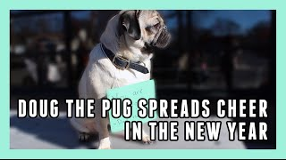 Doug The Pug Spreads Cheer To Perfect Strangers