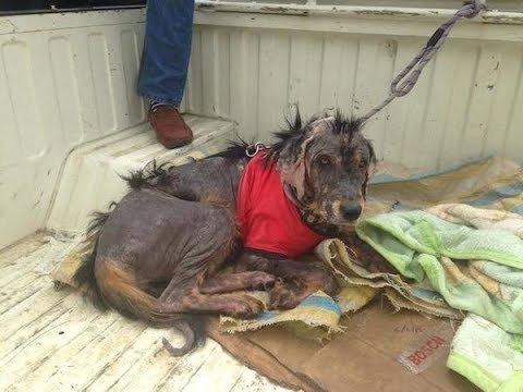 Stray Dog Found In The Himalayan Mountains Transformed By Stranger's Compassio