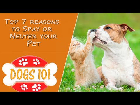 Top 7 reasons to Spay or Neuter your Pet