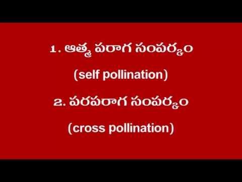 DA-111 | DIFFERENT TYPES OF POLLINATION in Telugu | LECTURE No-1
