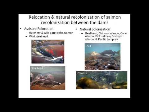 Ecosystem Response To The Removal Of The Elwha River Dams - Pess