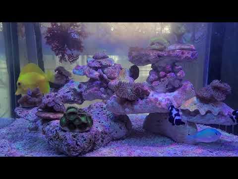 อุณภูมิที่เหมาะสมตู้ปลากับปะการัง