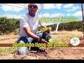 Uvas produzindo qualidade, Petrolina Semiárido 2/5
