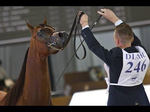 Dubai International Arabian Horse Fair: a showcase of beautiful horses