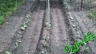 видео огород огурцы