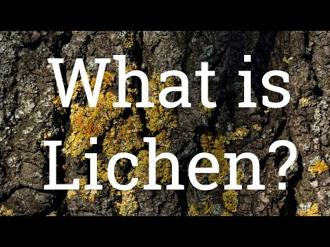 Liking Lichen - What is Lichen?: Gardening Know How's 2 Minute Gardening Tidbit: Episode 7