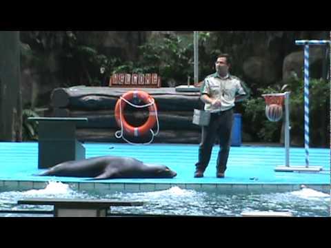 Seal show at Zoo Negara @ Malaysia 2011