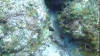 видео Малые и большие острова Атлантического океана. Их описание и характеристика