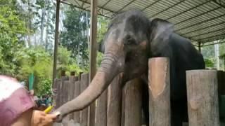 Santuari Gajah baharu akan dibina di Perak