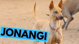 Jonangi  TOP 10 Interesting Facts