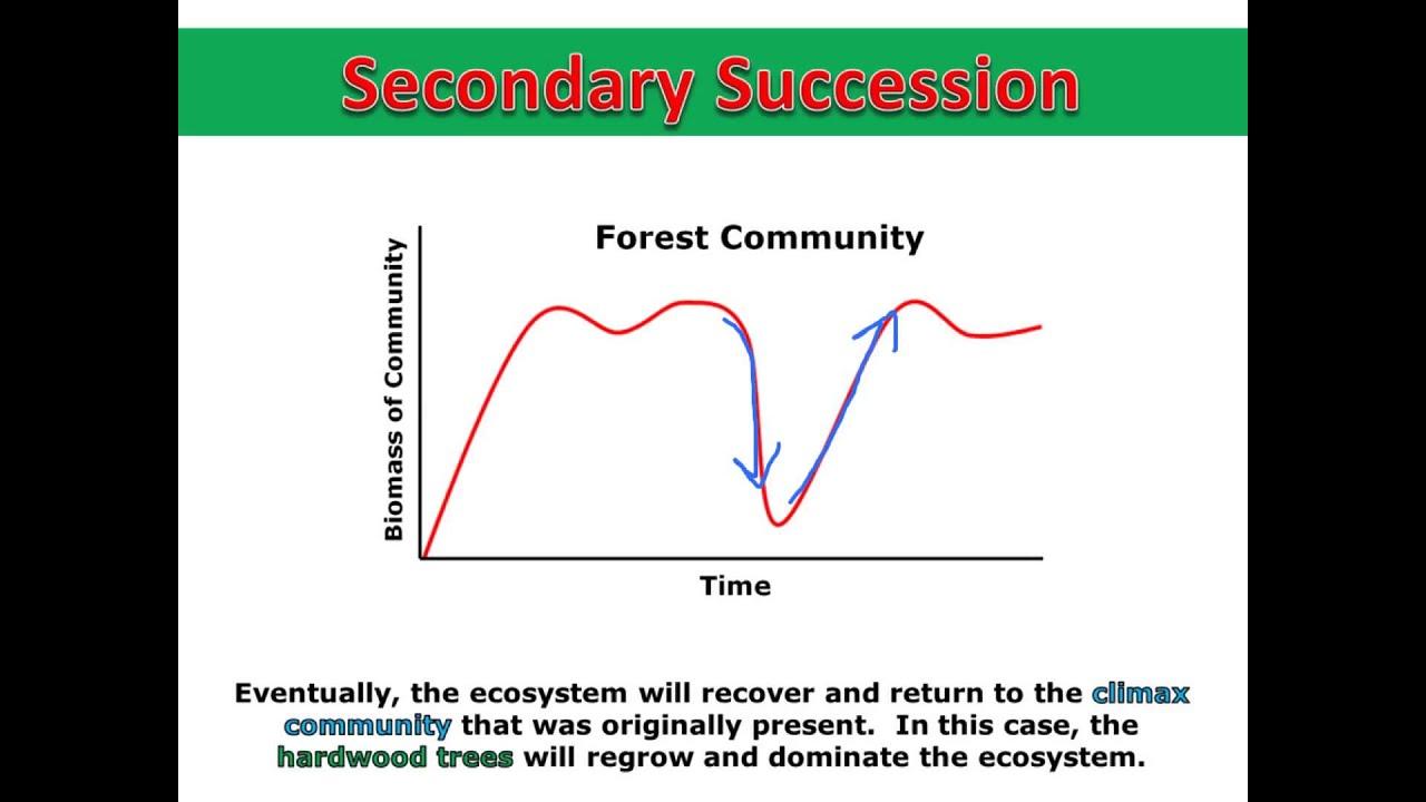Secondary Succession Graph