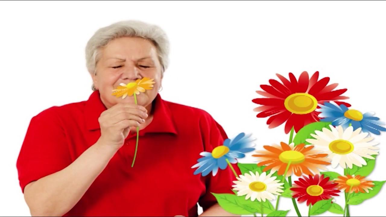 Голова садовая - Как посеять Додекатеон - YouTube