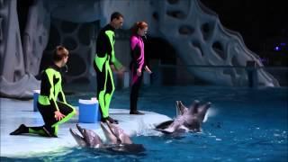 Наши дельфины ждут вас на шоу!