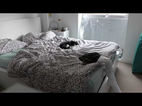Relaxation Video - 2 Cats on a bed sleeping in 4K for 2 hours, doing nothing but being a bloody cat