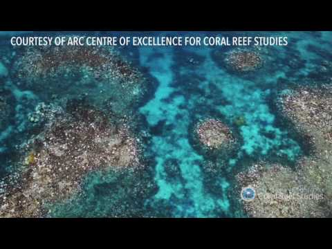 Coral bleaching at the Great Barrier Reef