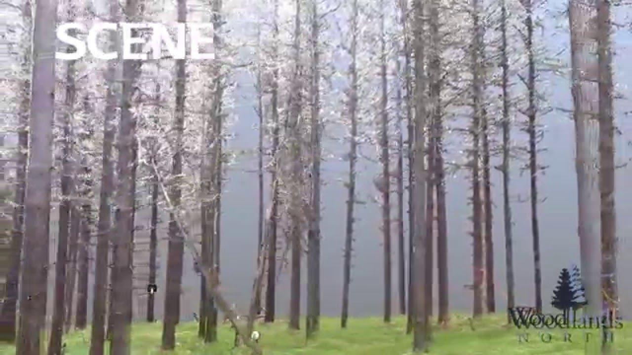 Terrestrial LiDAR Forest Sample Plot - YouTube