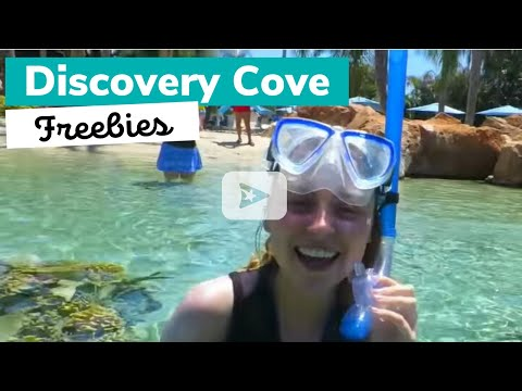 6 Things You Can Get For Free at Discovery Cove