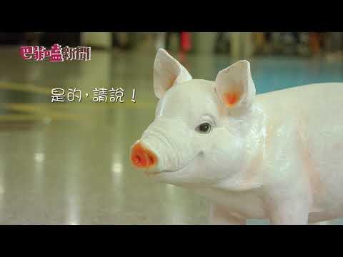 巴菲嗑午間新聞 護國神犬訪問