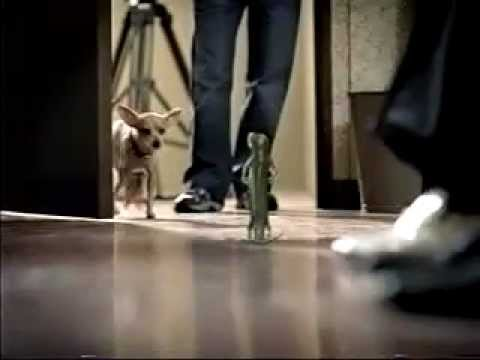 Geico Sign In >> Geico Commercial with Taco Bell Chihuahua - YouTube