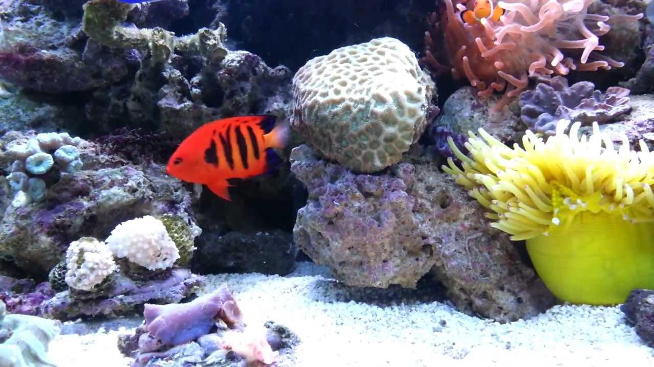 Red Sea Max 250 \