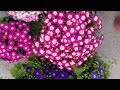 Top💯 Winter Flowering Plants And Caring Tips 2020    Plants To Grow In September
