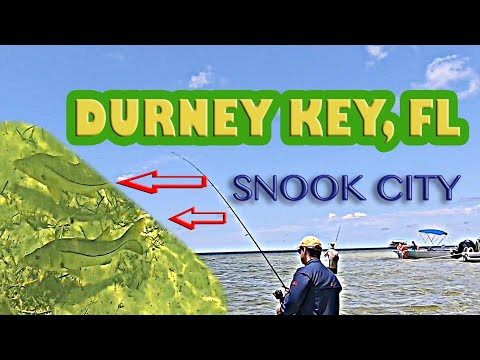New Port Richey, Fl. Durney Key Fishing For Schooling Snook