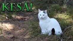Kentsun kesäpäivä! | Kissa ja Luonto
