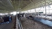 Replacing Cow Mattresses
