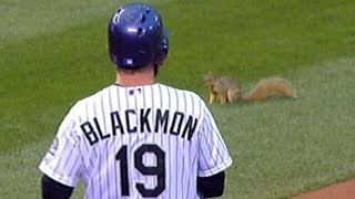 A squirrel on the field stops play