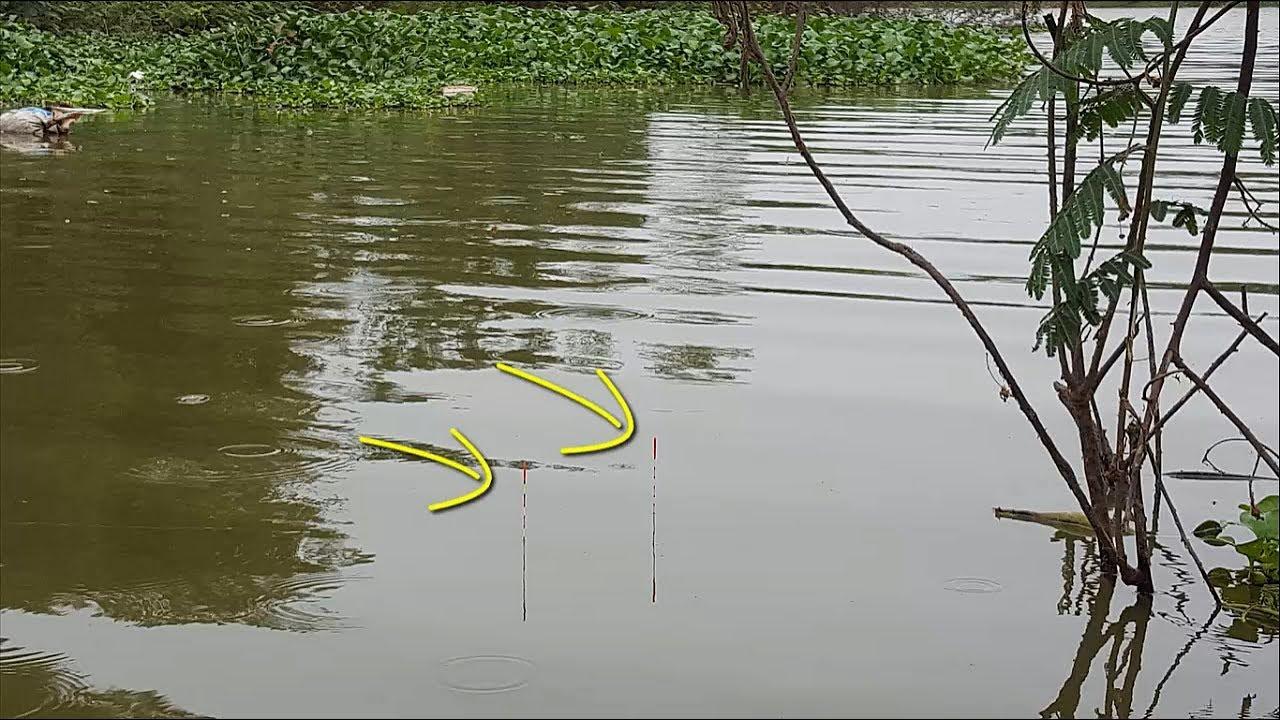 Câu cá sông tự nhiên được toàn cá chép cá diếc cụ
