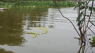 Fishing for wild river carp