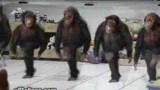 irish monkey dance(stephens version)